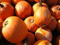 pumpkin - rich bowen flickr.jpg